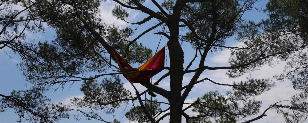 Grimpe dans les arbres & Apéro Perché